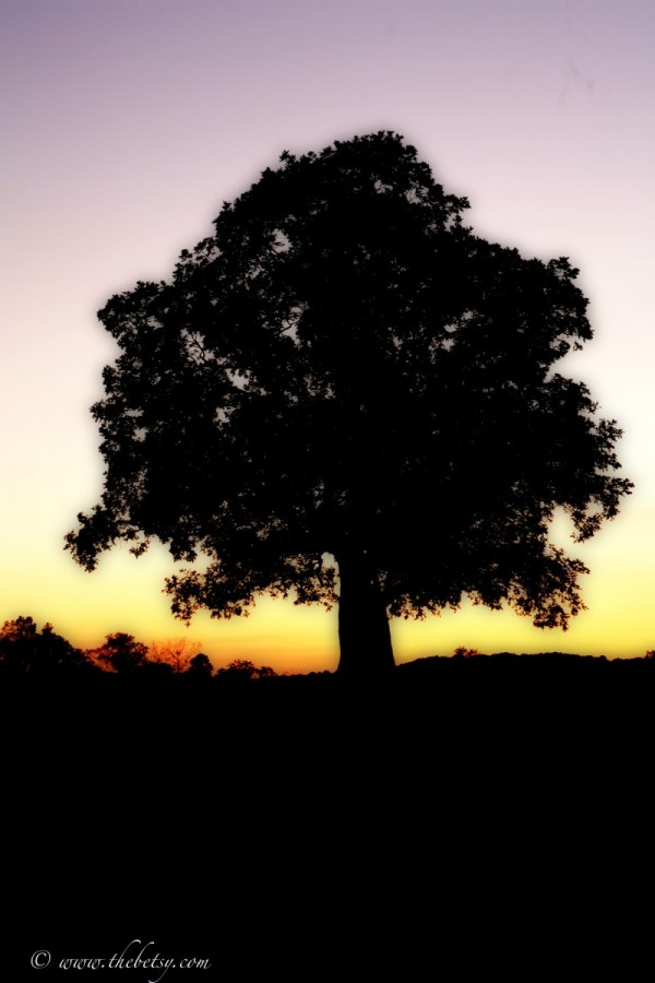 mcafee farm my tree glenmoore
