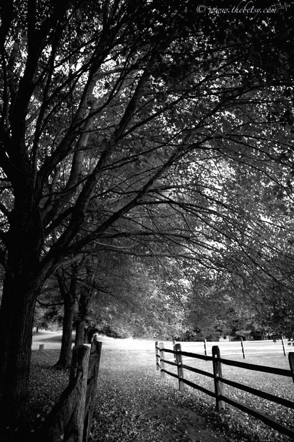 McLeod Pond Road