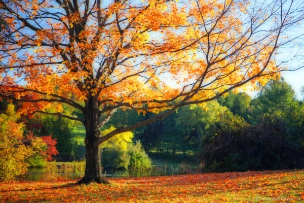 fall landscape the plains virginia merry oak farm