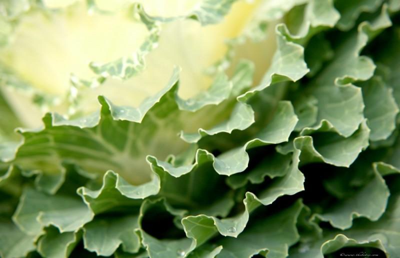 macro cabbage fall glenmoore pennsylvania chester