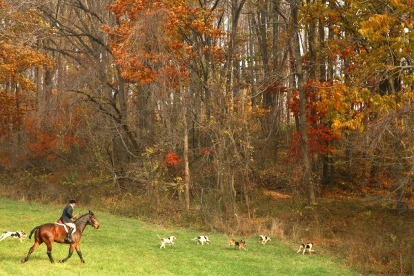 pickering hunt fox hunt chester county horses