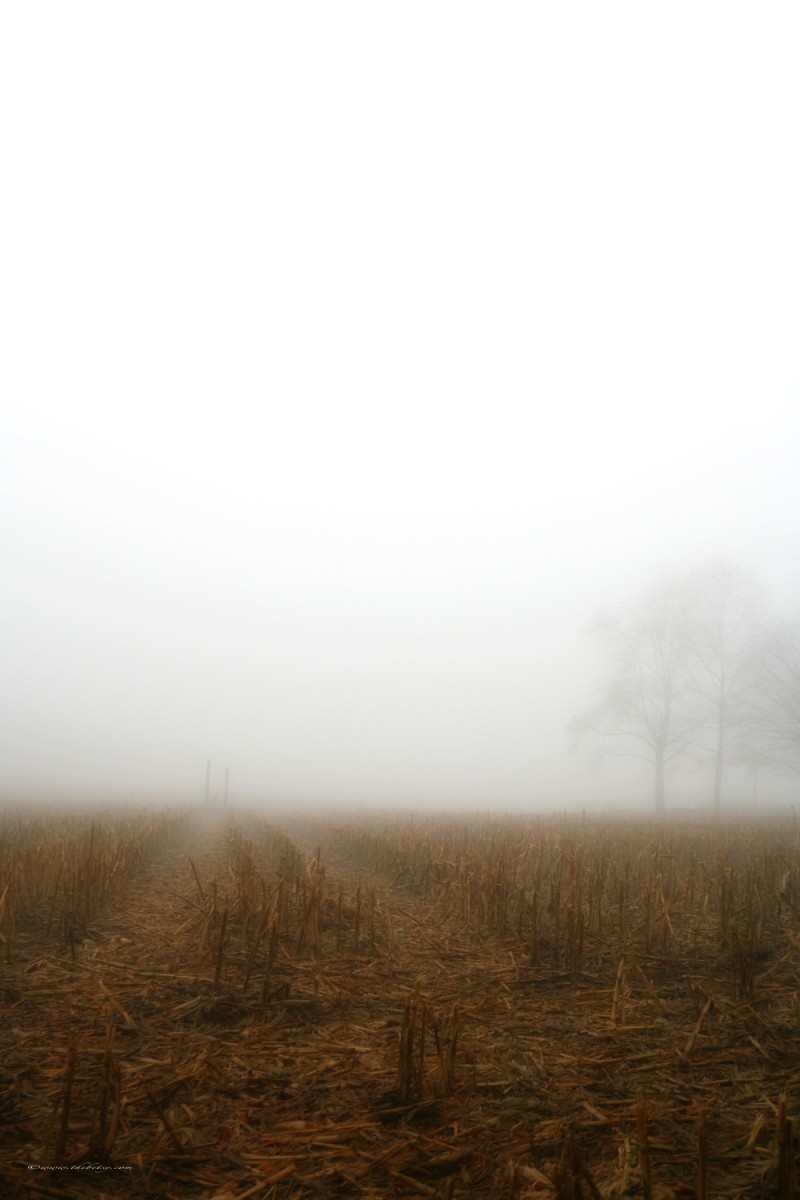chester county pennsylvania foggy corn fields