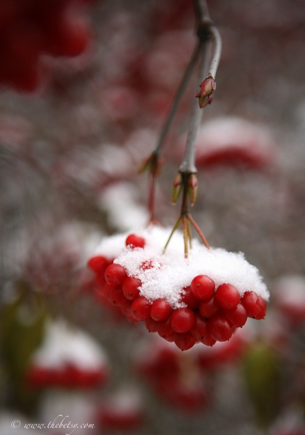 winterberry snow chester county