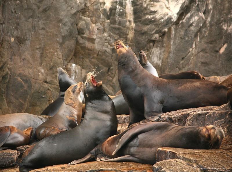 sea lions el arco cabo san lucas
