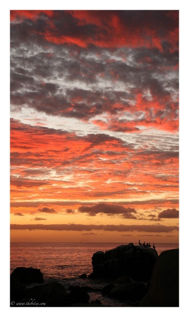 fiery sunrise over cabo pelicans