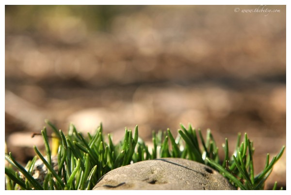 rise up green grass bokeh march spring