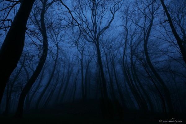march fog evening trees pinch dream blue