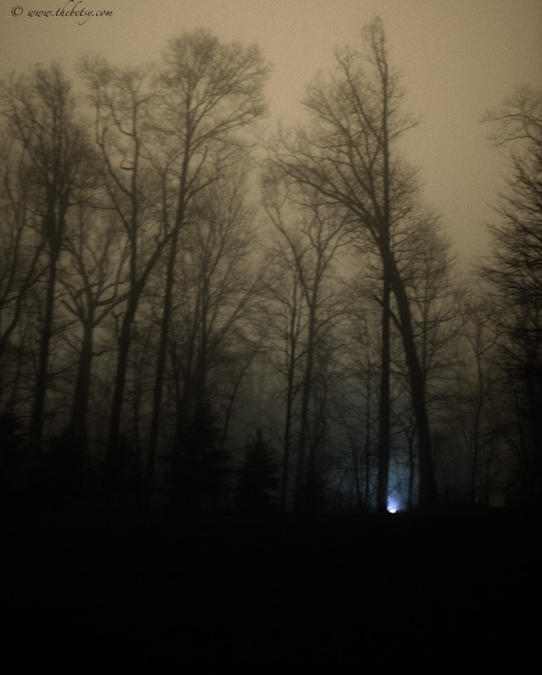 lurking treescaoe fog