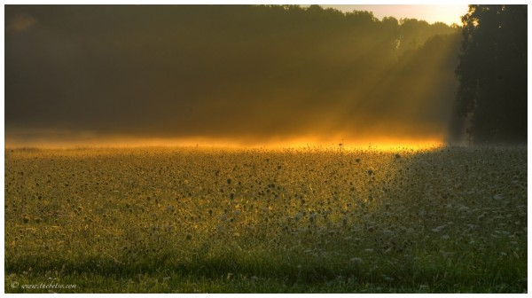 sunlit morning mcafee farm