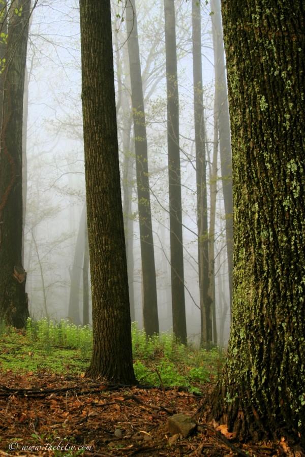 fog spring green growth rebirth normandy