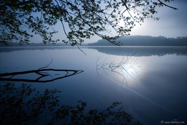 marsh creek blue dawn fog tree landscape morning