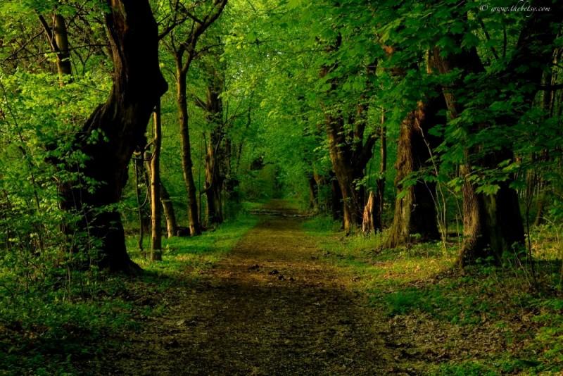 marsh creek state park green spring verdant woods