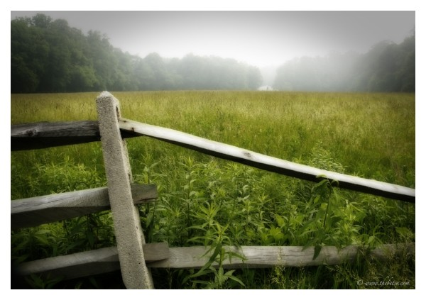 two bit farm fog morning 401 fence mist oe