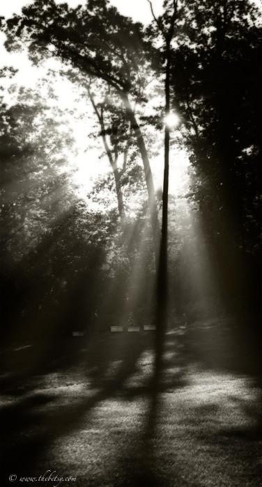 sun rays summer morning light trees lens flare