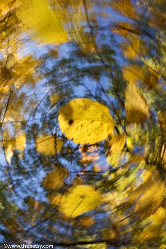 swirl, leaves, fall, autumn, yellow, blue
