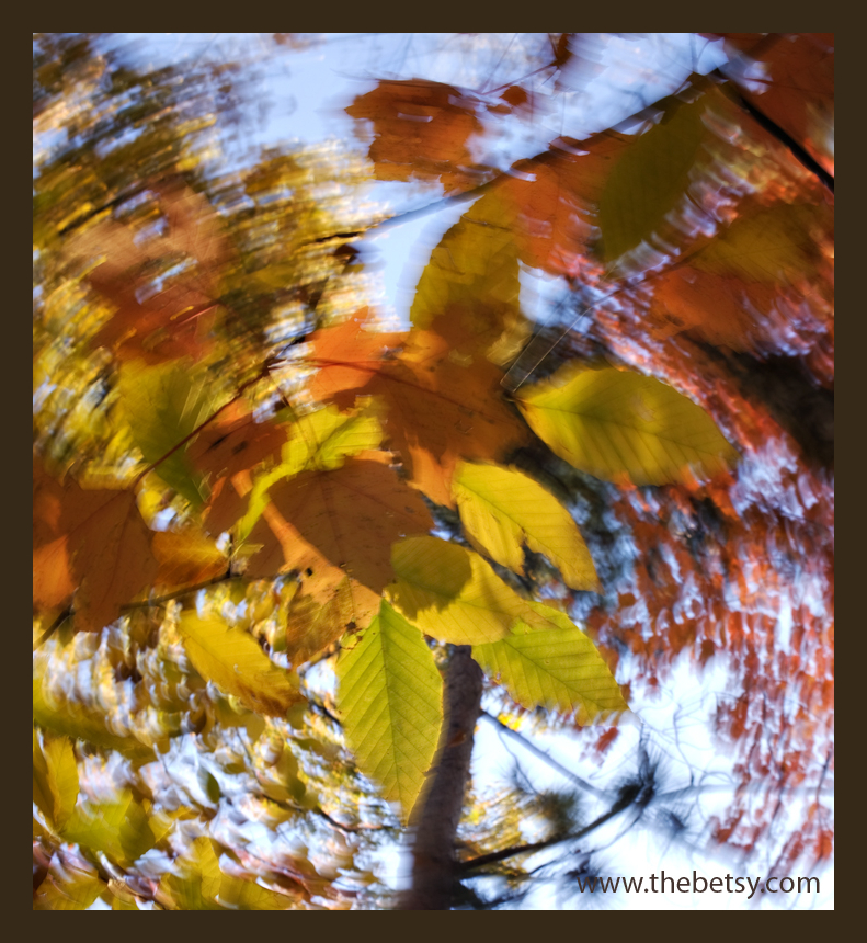 swirl, leaf, autumn, gold, orange, red, blue
