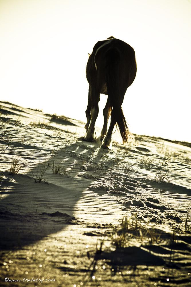 horse, rear, assateague, beach, sand, sunrise,