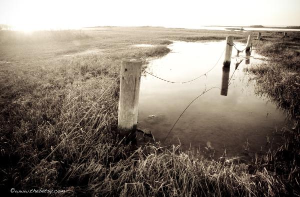 tide, bay, water, marsh, assateague