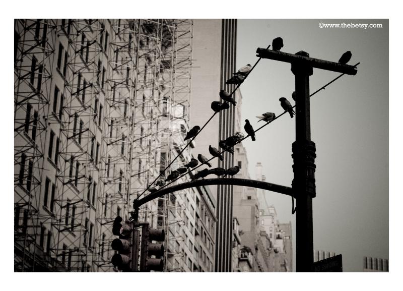 new-york-city, birds, scaffolding, building, stree