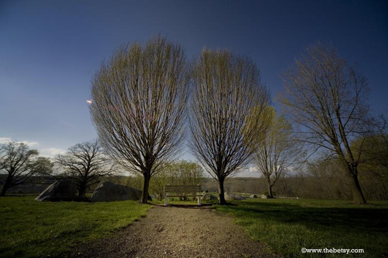 trees, springton-manor, spring, path