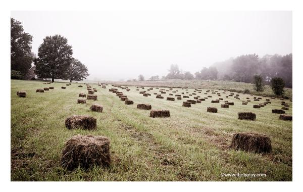 hay-bales, malvern, farm, fields, fall