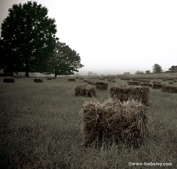 hay-bales, malvern, farm, fields, fall