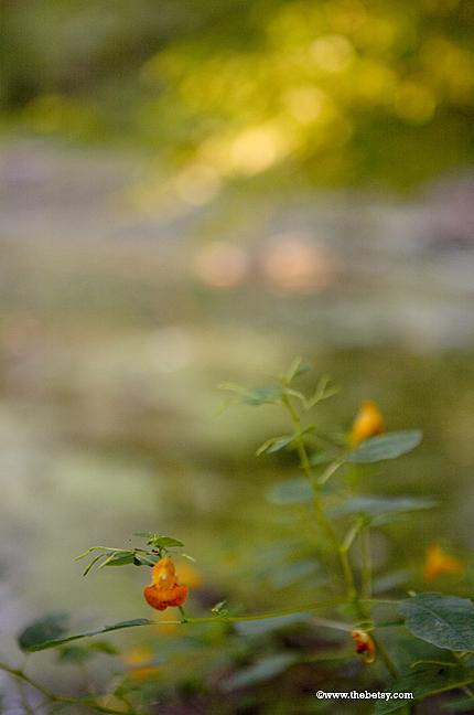 orange, flower, bokeh