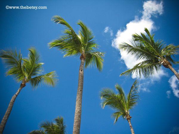 palms, sky, clouds