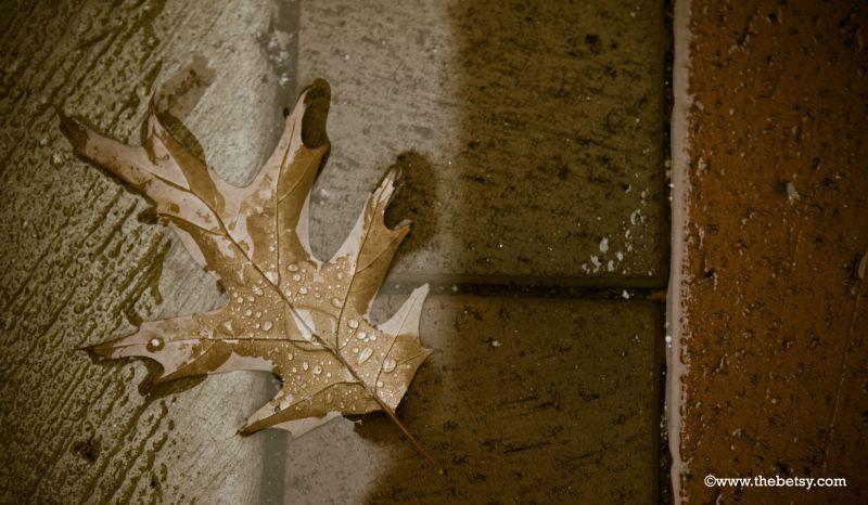 leaf, rain, puddle, drop, water, sidewalk, fall