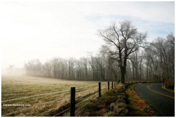 farm, fields, road, curve, fog, trees, rocks