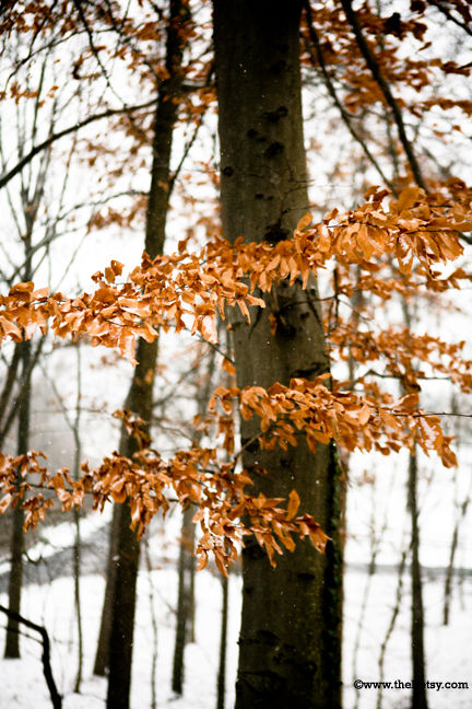 tree, snow, leaves, brown, december