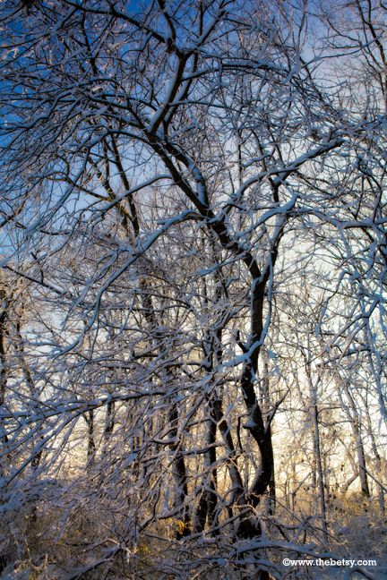 snow, trees, sunlight, morning, sunrise