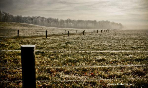 farm, fields, fog, trees, fence, ice