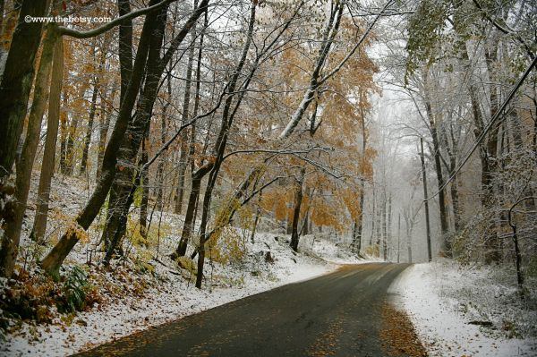 road, winter, fall, snow, leaves