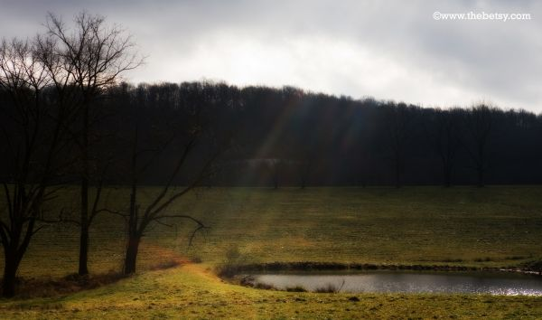 field, pond, light, clouds, trees, landscape