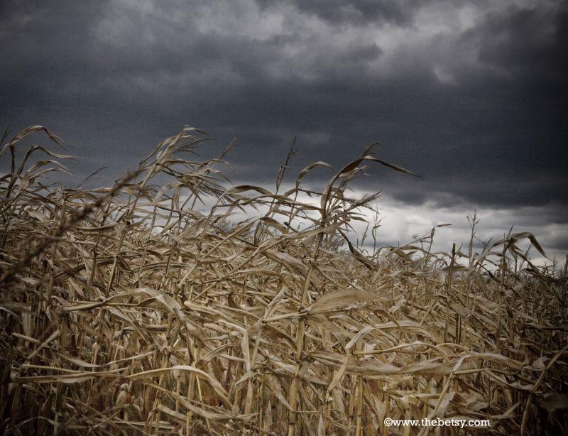 corn, storm, clouds, sky