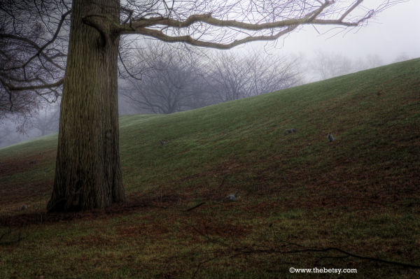 squirrels, tree, longwood, winter