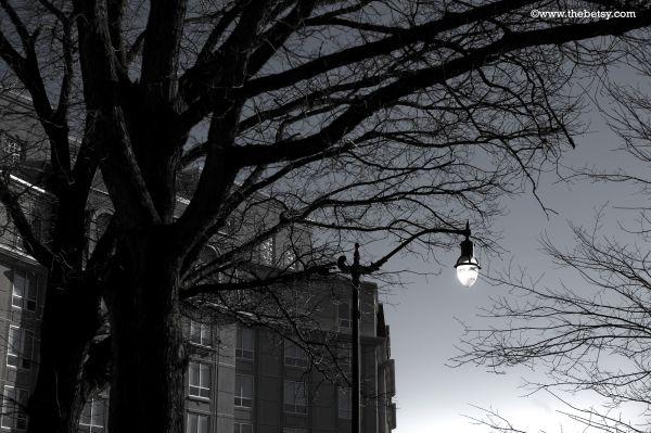 streetlight, trees, annapolis, sky