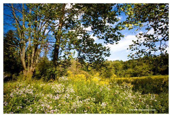 summer, trees, sky, flowers, wildflowers