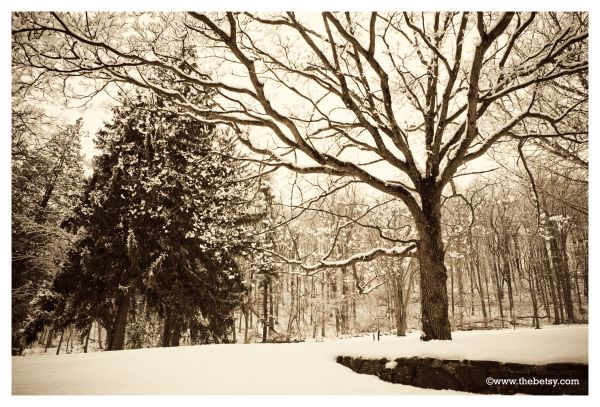 snow, trees, winter