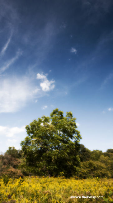 tree, welkinweir, summer, sky