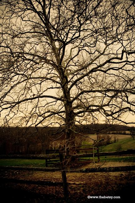 tree, farm, field, fence, sky, country