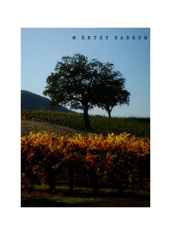 napa, california, vineyards, tree, sky
