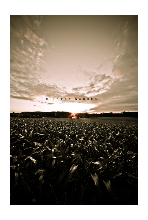 corn, field, sky, clouds, sepia, sunset