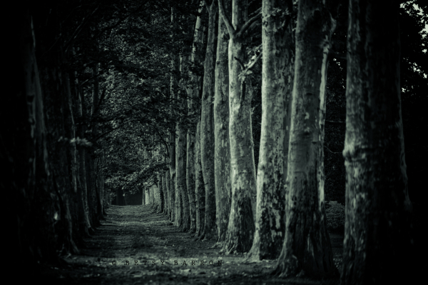 trees, country, lane, sycamore, woods, path, dista