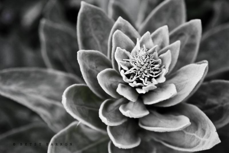 plant, fall