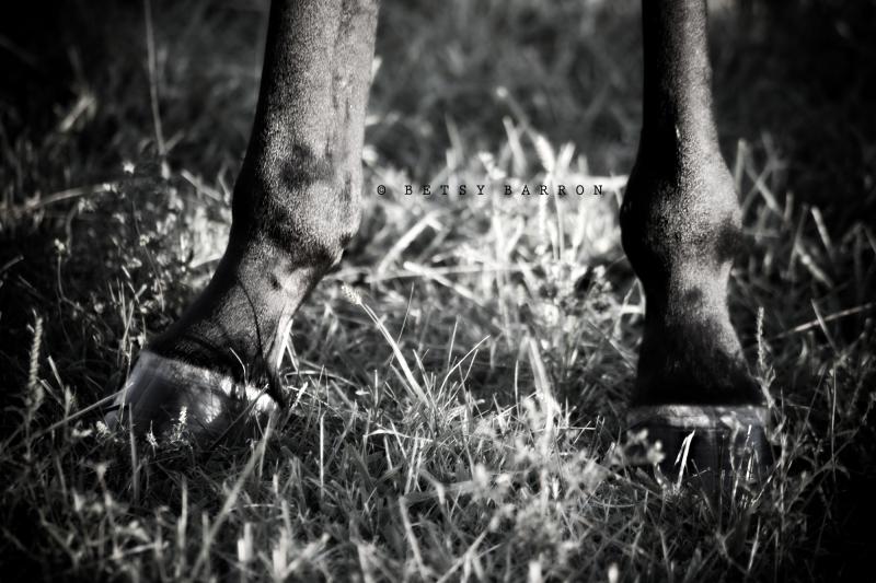 horse, hoof, grass