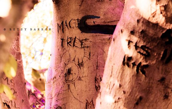 tree, magic, welkinweir, old, nostalgia