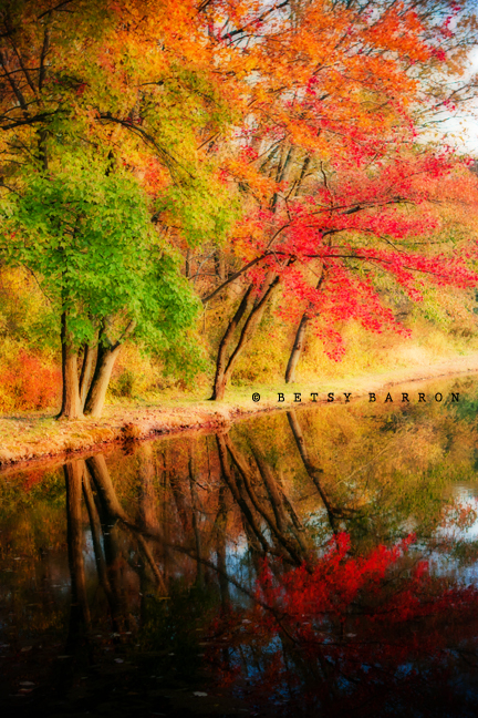fall, trees, autumn, color, farm, reflection