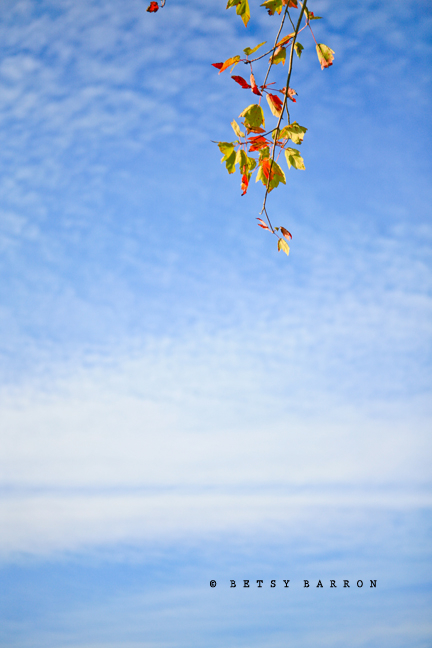 fall, autumn, leaves, sky